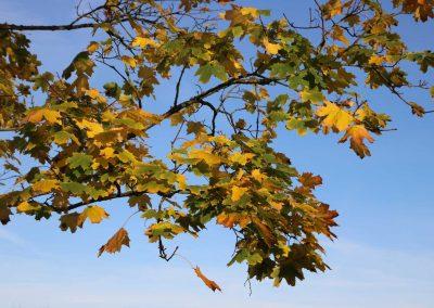 Herbstlaub-in-Oberschwaben