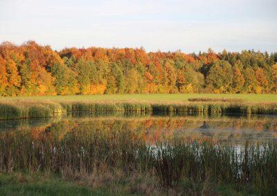 Herbststimmung-am-Wettenberger-Ried