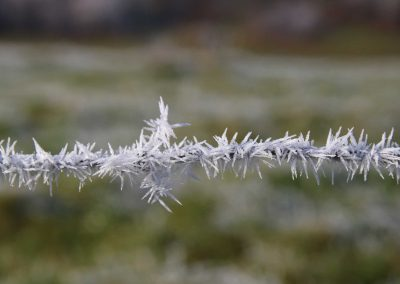 Viehzaun-im-Frostzauber